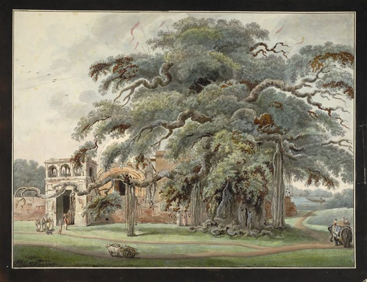 Image result for temple and banyan tree images